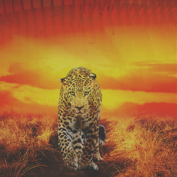 jaguar animal animallover nature sundown freetoedit