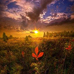 freetoedit remixit nature landscapephotography beauty pretty landscape beautiful autumn fall fallcolors leaves backlight follow fanart