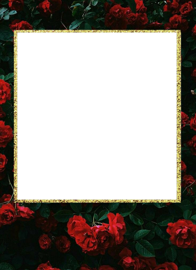 #polaroid #frames #fyp #rose #roses #floral #flowers #sticker #red #classic #aes #aesthetic #tumblr #gold