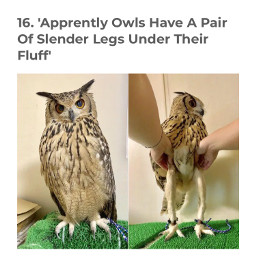 owlshavelonglegs
