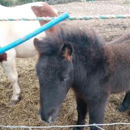 horselove beautifulbirthmarks animaleye animaux horse equitation hors horsepower freetoedit