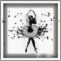 freetoedit siluetadedientedeleon ircdandelionsilhouette dandelionsilhouette
