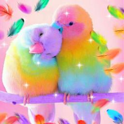 parrots lovebirds cute colourful