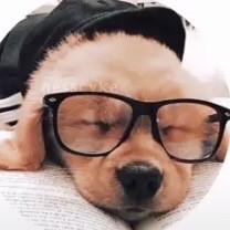 cute cutedog dog