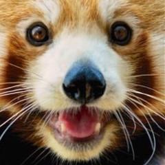 mathematical_panda