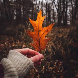 autumn fall nature naturelover freetoedit orange crispleaves picsart forest moodyday moody mood photography