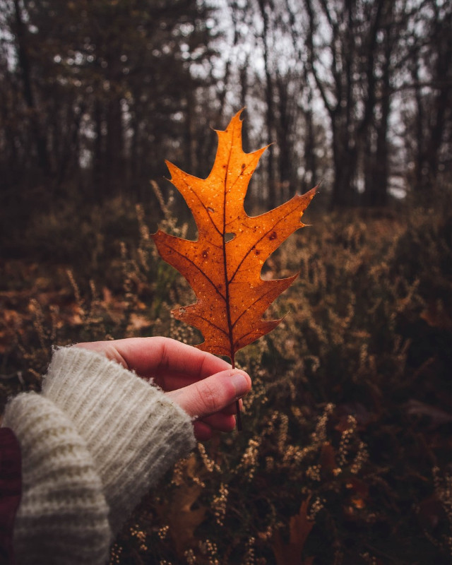 Crisp Autumn Leaf 🧡🍁💫 #autumn #fall #nature #naturelover #freetoedit #orange #crispleaves #picsart #forest #moodyday #moody #mood #photography