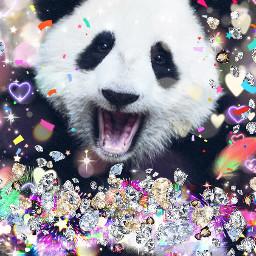 pandasquad freetoedit