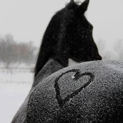 chevauxunivers