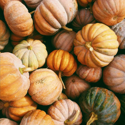 pumpkin thankful thanks thankyou thanksgiving celebration freetoedit
