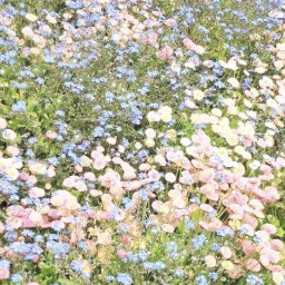 flower sparkle nature soft cottagecore pink yellow blue pretty green grass background aesthetic pic aestheticpic