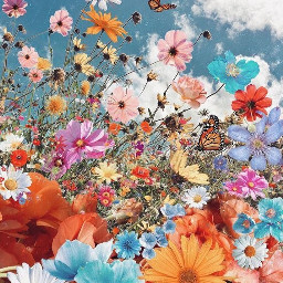 freetoedit sky cloudyday flowers colorful butterflies