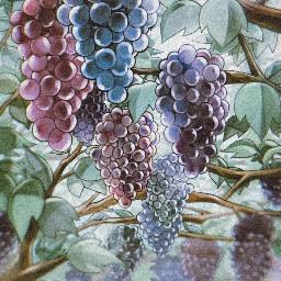 grapes uvas uva grapesaesthetic aesthetic mysticmessenger filter mysticmessengerjumin juminhan juminmysticmessenger mysticmessengeredit freetoedit