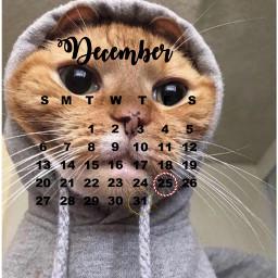 cat freetoedit srcdecembercalendar decembercalendar