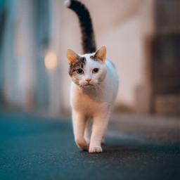 cat cats animal animals street freetoedit