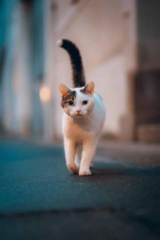 Let you imagination take over. Unsplash (Mathieu Odin) #cat #cats #animal #animals #street #freetoedit