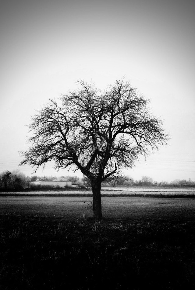 #freetoedit #tree #blackandwhite #nature #photography