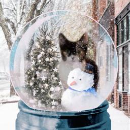 snowglobe catsofpicsart freetoedit rcsnowglobe