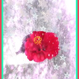 freetoedit myoldphoto editedwithpicsart goodbye thankssomuch ilovepa iloveyou merrychristmas2020 goognew2021