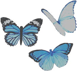 freetoedit blue blueaesthetic bluebutterfly blueandwhite butterfly butterflyeffect butterflies butterfliesstickerremix butterflywings butterflys glitter sparkle glitterwings sparkles glittery glitteroverlay magic pink magenta insect bug purple cute aesthetic
