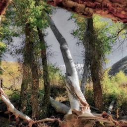 angeleyesimages landscape landscapephotography nature naturephotography tree trees nikon nikonusa canon canonusa picoftheday instagram picsart travel traveler traveling travelphotography beautiful mountains