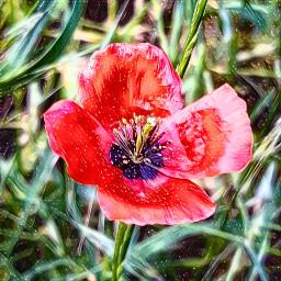 wild wildflower red freetoedit