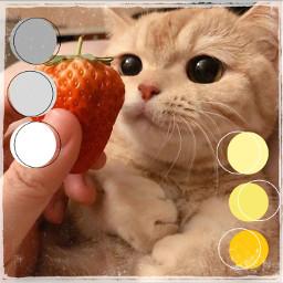 cat freetoedit rccolorsoftheyear colorsoftheyear