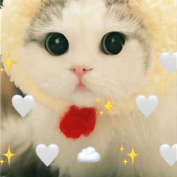 cat freetoedit srcmonochromeemojis monochromeemojis
