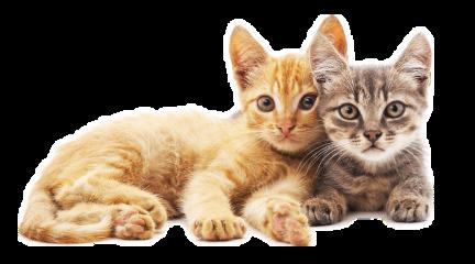 catcute cats alzib freetoedit
