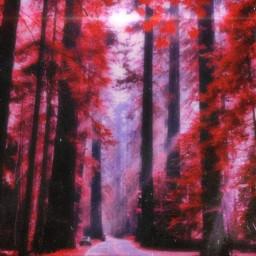 landscape redleaves redtrees redlandscape trees beutifullandscape aesthetic vhs text dreamy light sunlight magical freetoedit
