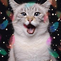 cat cute cutecat catedit catlover catlove kitten beautifulkitten neko prr freetoedit
