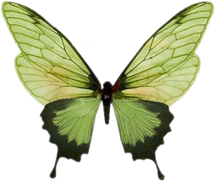 #freetoedit #remixit #cottagecore #y2k #goth #emo #cute #natural #shirt #picnic #aesthetic #floral #flowers #ootd #outfit #hellokitty #yellowaesthetic #blackaesthetic #forest #marmur #butterfly #wings #giantanimals