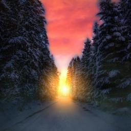 freetoedit myedit madewithpicsart remixed nature landscape trees road snow sunrise remix remixme