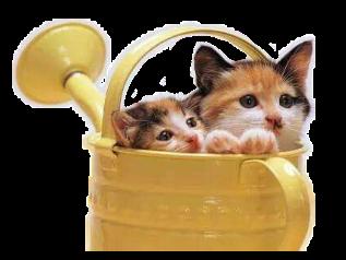 cats catfofo catcute alzib freetoedit
