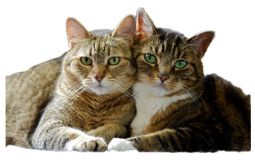cats catlove catcute alzib freetoedit