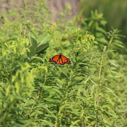 butterfly butterflies naturephotography myphotography orange green nature