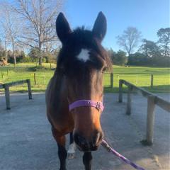 animal_lover_horses