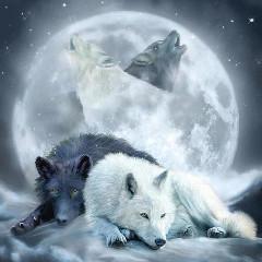 nixthebloodwolf
