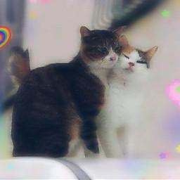 casal casaldegatos gatos lindo freetoedit