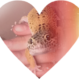 mygecko baby 5monthsold aww cute heart ily sweet leopardgecko leopardgeckos mine cutie boy male hearts love