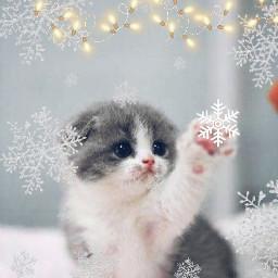 kittykat freetoedit