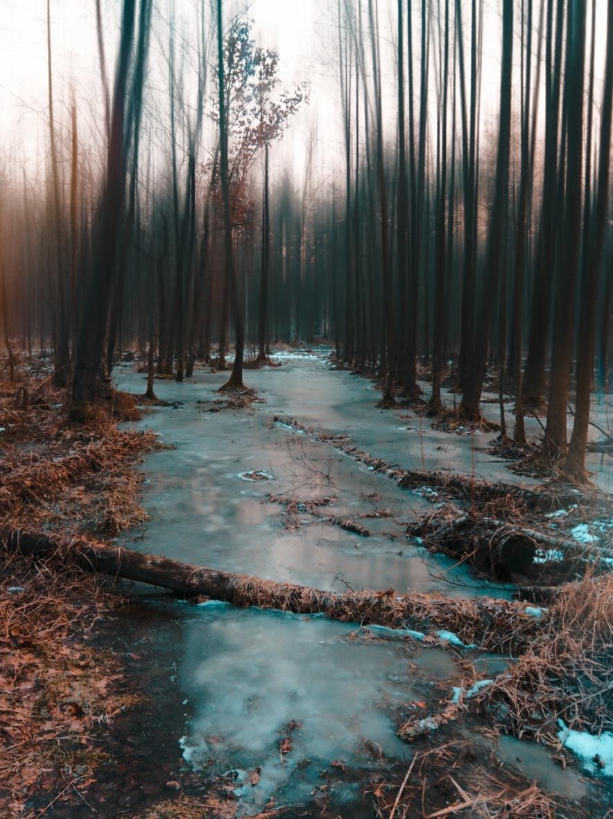 #winter #frozen #coldday #winterwonderland #trees #forest #swamp