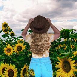 photographie picsarteffects picedits photoedit feedtumblr phototips sunflower photoart
