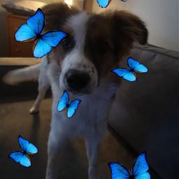 dogg freetoedit