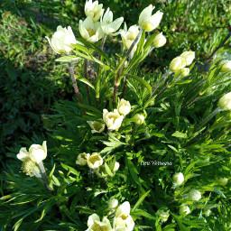 whiteflower flower nature photography