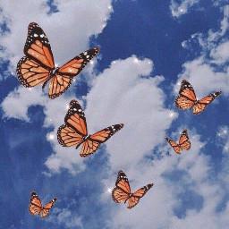 aesthetic butterfly sky cloud butterflies nuvolebianche nuvole freetoedit