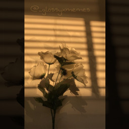 flower flowerphotography brown brownaesthetic aesthetic aestheticedit aesthetictumblr aestheticwallpaper layers picsart madewithpicsart picsarteffects aestheticbrown tumblr tumblrgirl vibes