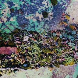 dubravka_m dubravka_m_art photography honor20lite abstractphotoart abstractphotography photogram mahovina moss north colorfulphoto colorsofnature pctheblueisee theblueisee