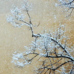 myphotography nature tree trees snow photography background freetoedit