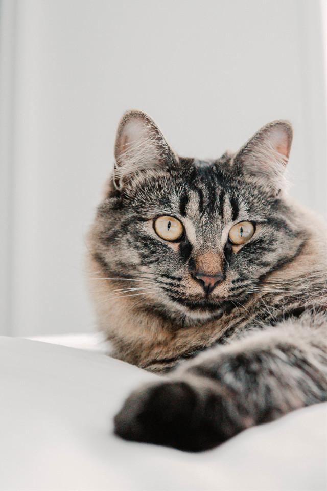 Showcase your editing skills. Unsplash (Mathilde Langevin) #cat #cats #kittie #animal #animals #freetoedit